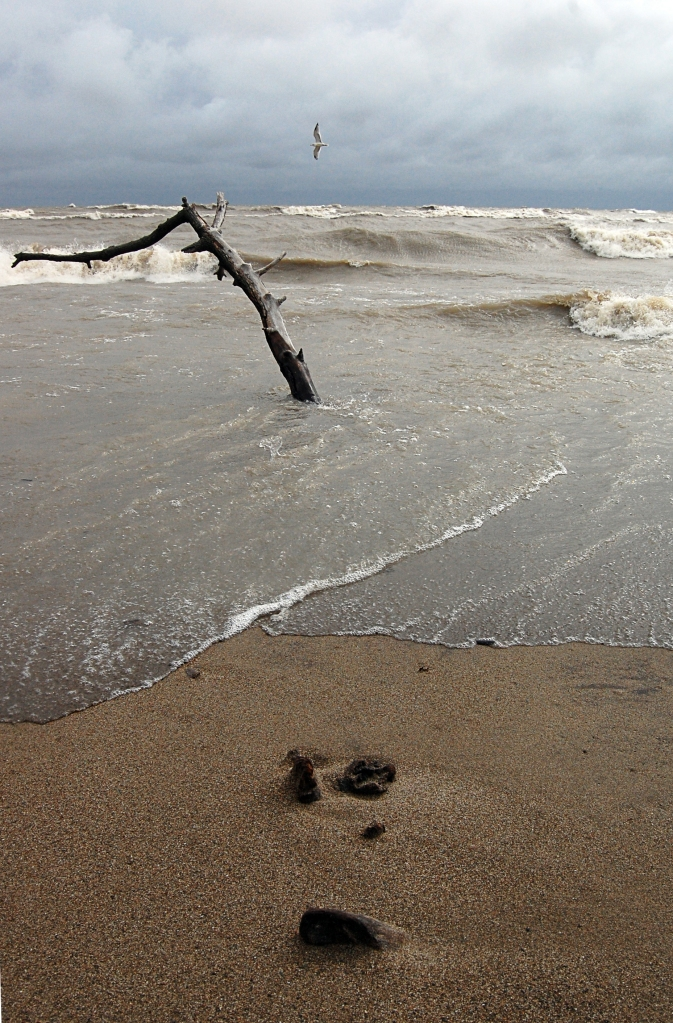 Lake Erie with Sand, Branch and Bird