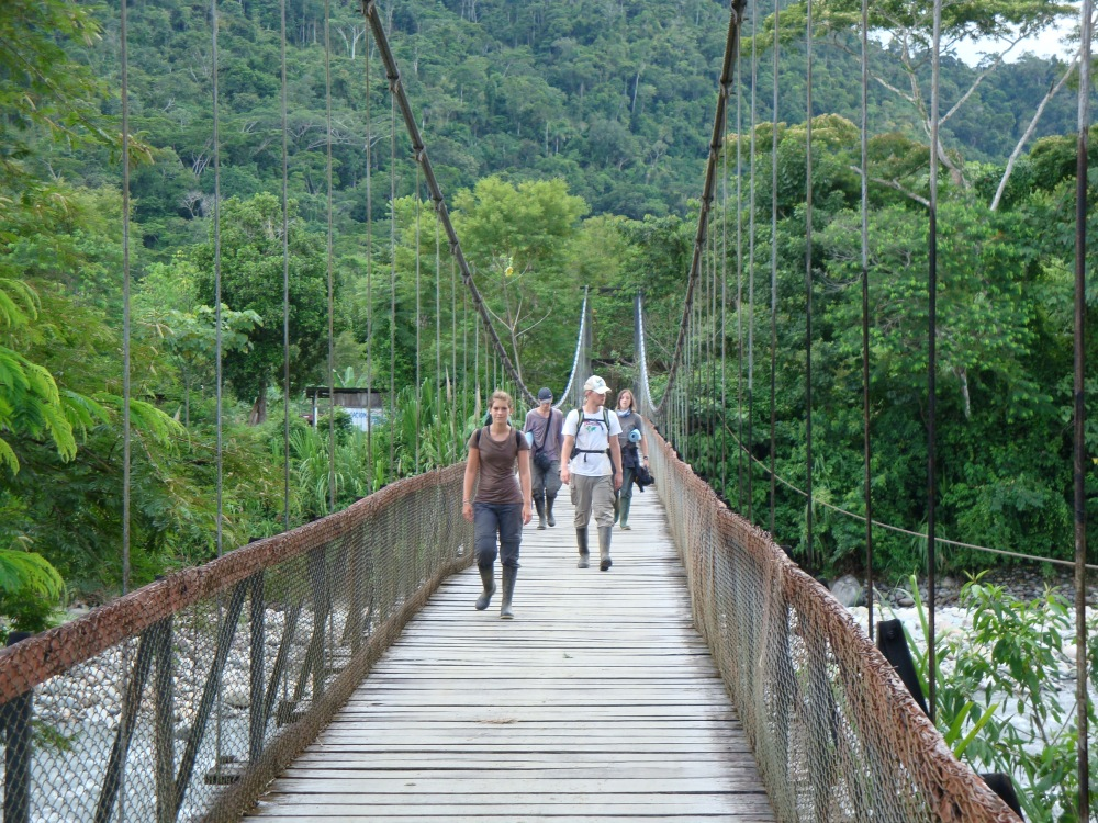 Bridge in the Amazon Rainforest