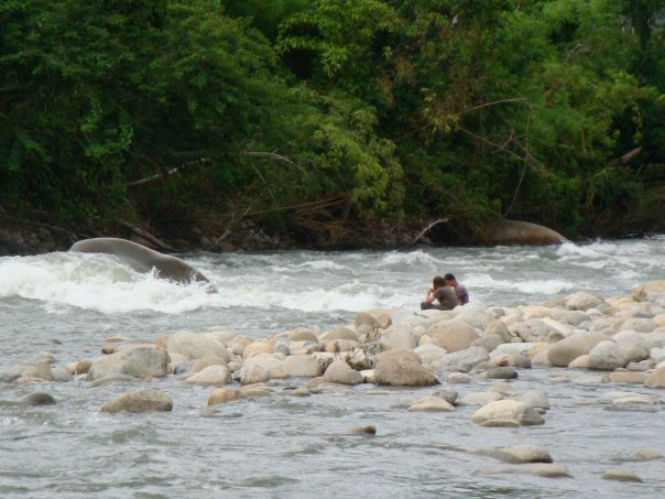 Stony River in Amazon Rainforest