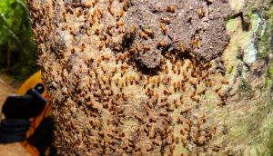 Yummy Termites on Tree in Jungle