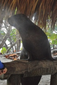 Sea Lion Under a Tree
