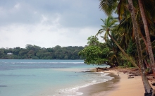 Bocas del Drago palm trees beach
