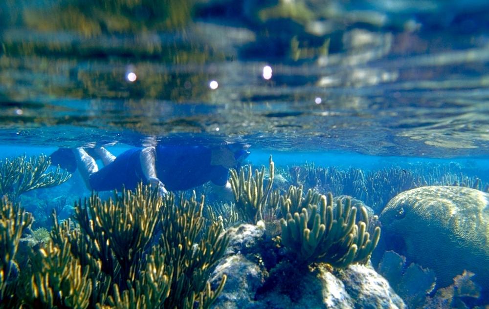 snorkel-shallow