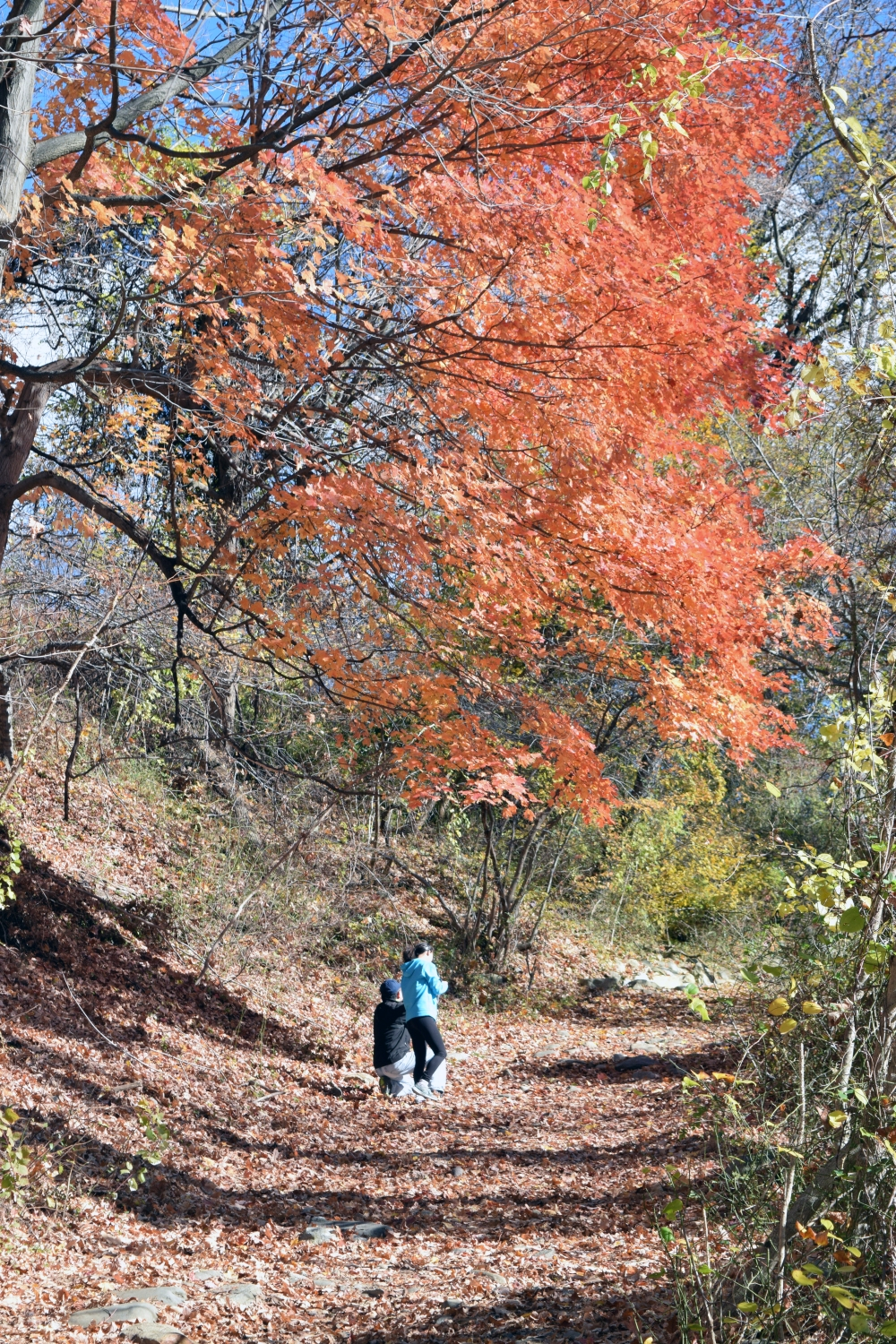 Red Tree Trail.jpg